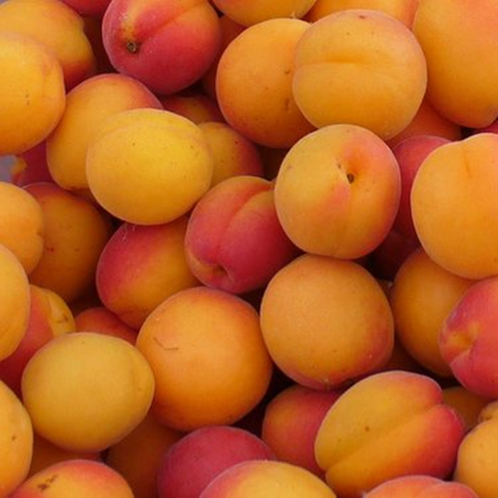 3000g canned apricots havles